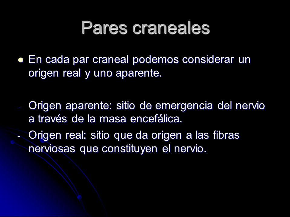 Pares craneales En cada par craneal podemos considerar un origen real y uno aparente.