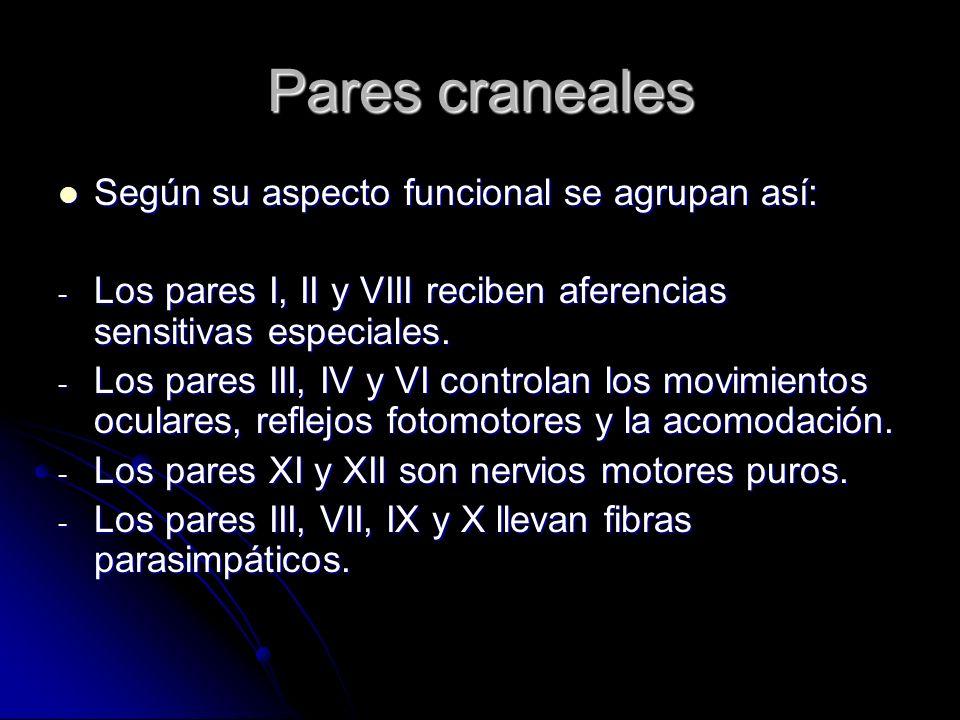 Pares craneales Según su aspecto funcional se agrupan así: