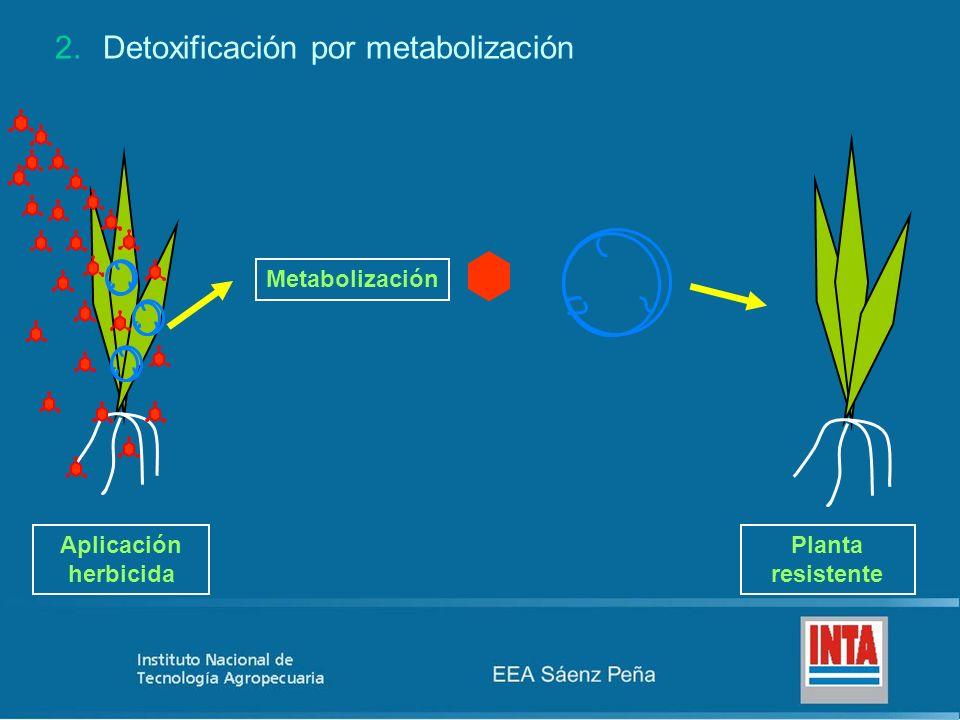 Detoxificación por metabolización