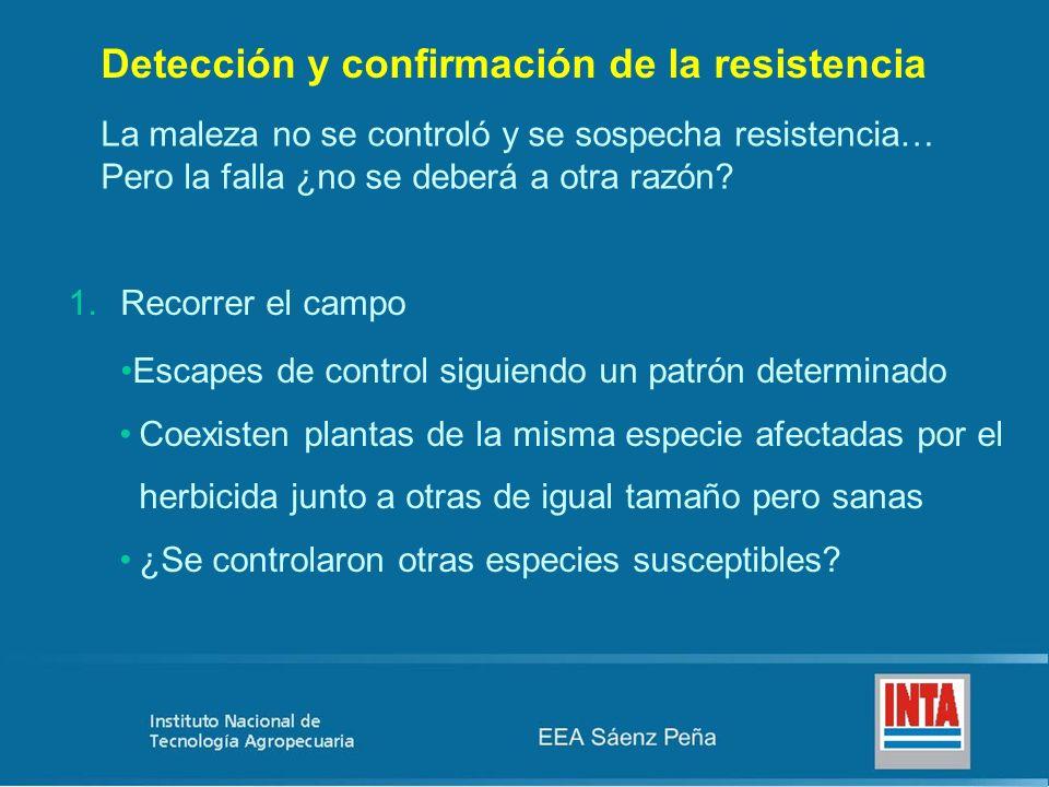Detección y confirmación de la resistencia