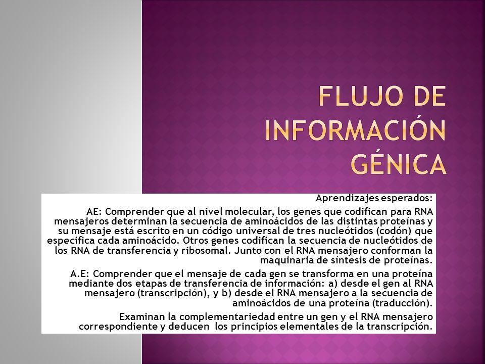 Flujo de información génica