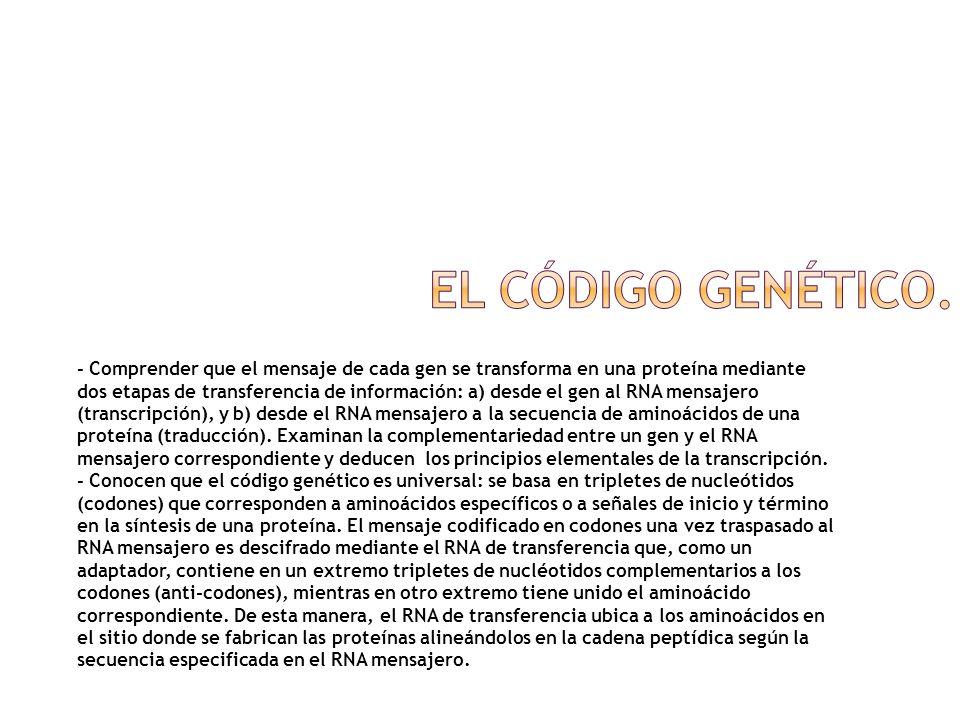 El código genético.