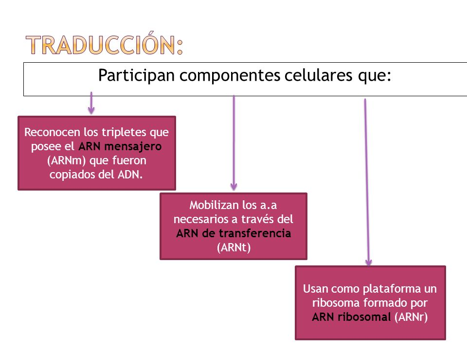Traducción: Participan componentes celulares que: