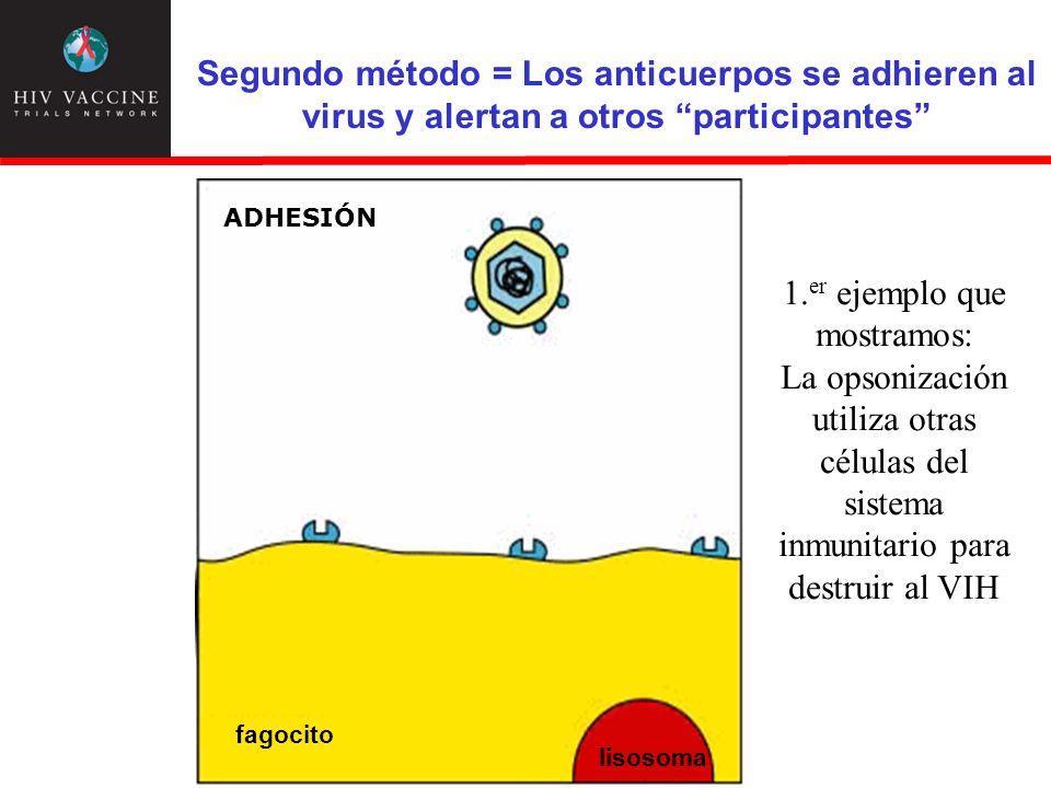 Segundo método = Los anticuerpos se adhieren al virus y alertan a otros participantes
