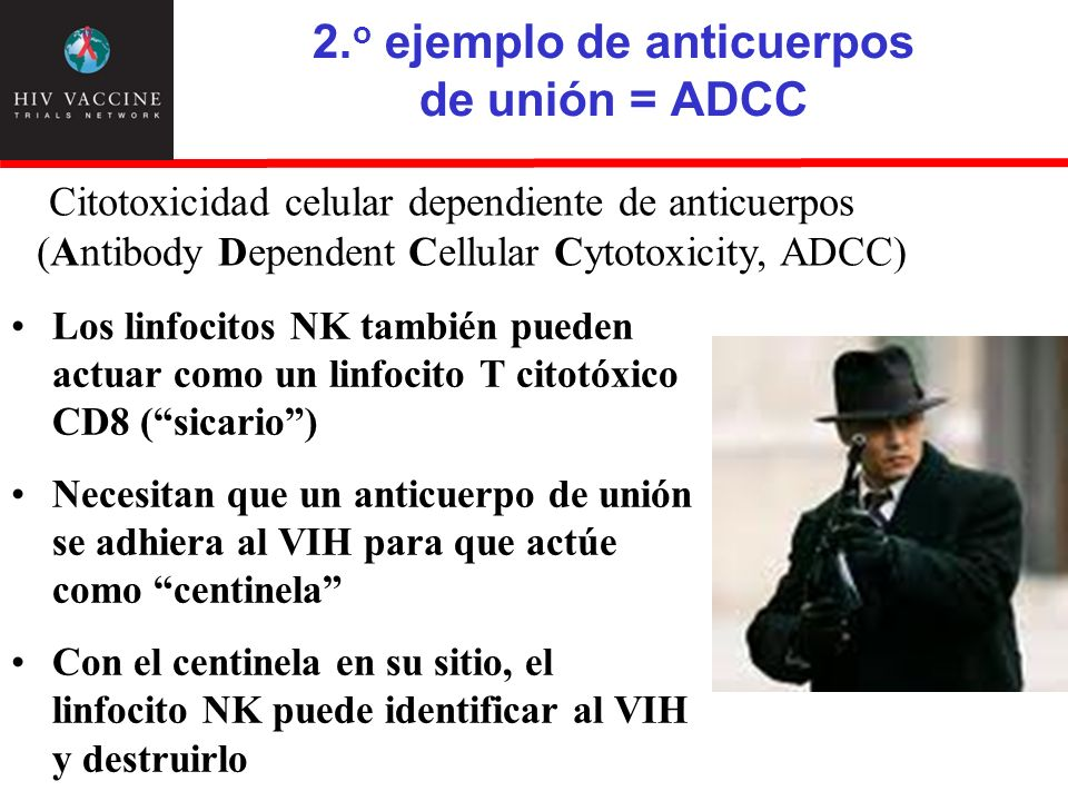 2.o ejemplo de anticuerpos de unión = ADCC