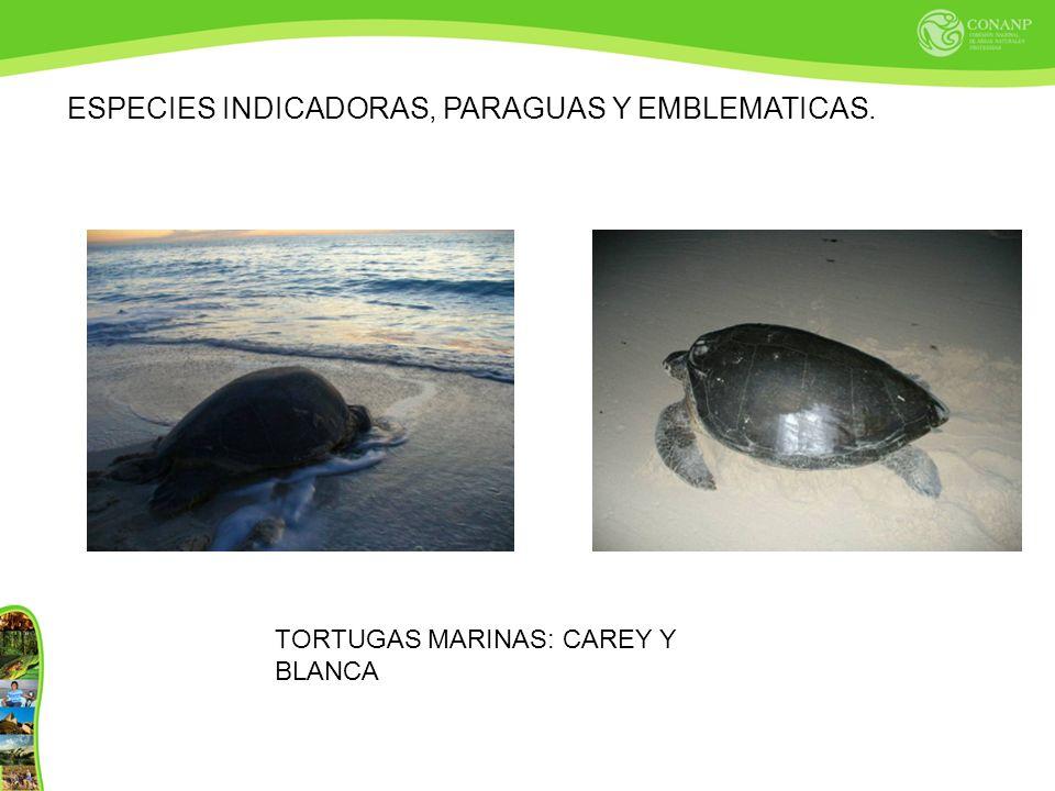 ESPECIES INDICADORAS, PARAGUAS Y EMBLEMATICAS.