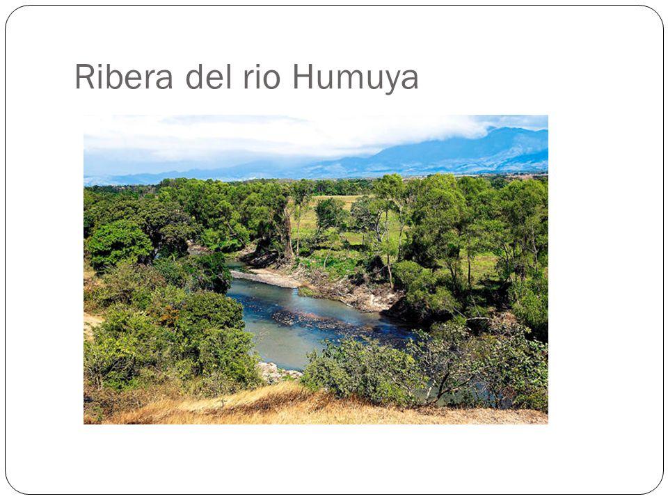 Ribera del rio Humuya