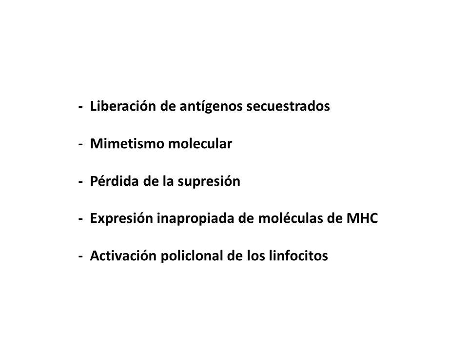 - Liberación de antígenos secuestrados