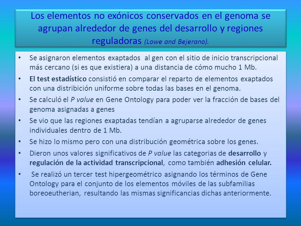 Los elementos no exónicos conservados en el genoma se agrupan alrededor de genes del desarrollo y regiones reguladoras (Lowe and Bejerano).