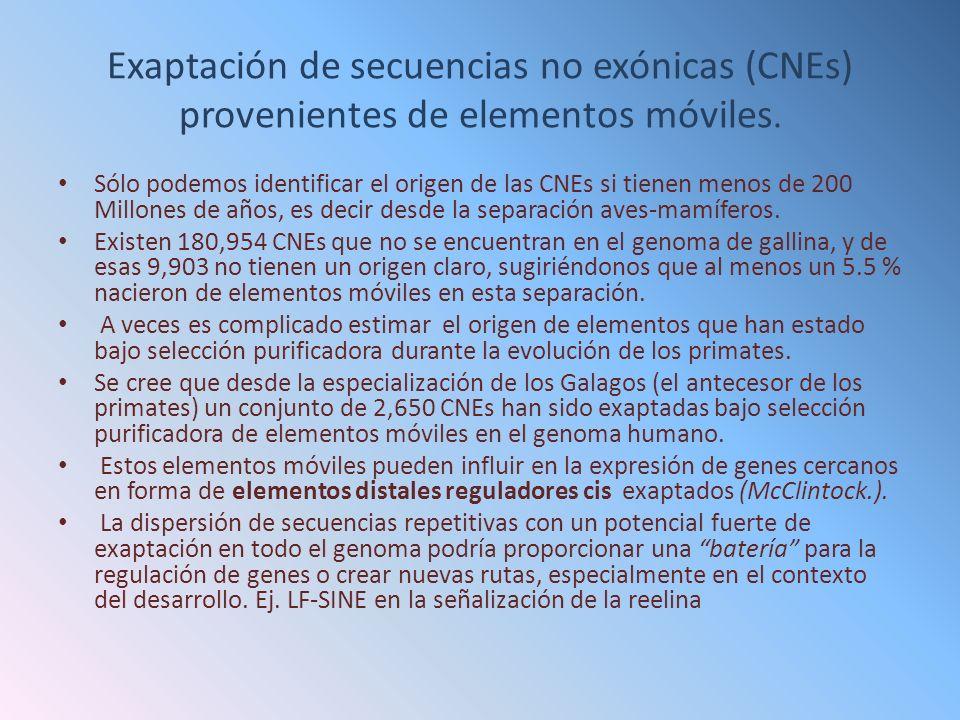 Exaptación de secuencias no exónicas (CNEs) provenientes de elementos móviles.