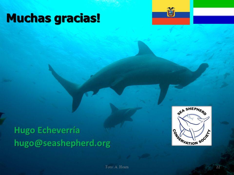 Muchas gracias! Hugo Echeverría hugo@seashepherd.org Foto: A. Hearn