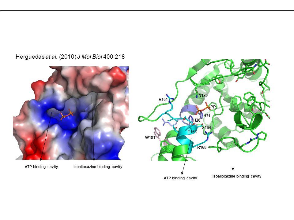 Herguedas et al. (2010) J Mol Biol 400:218