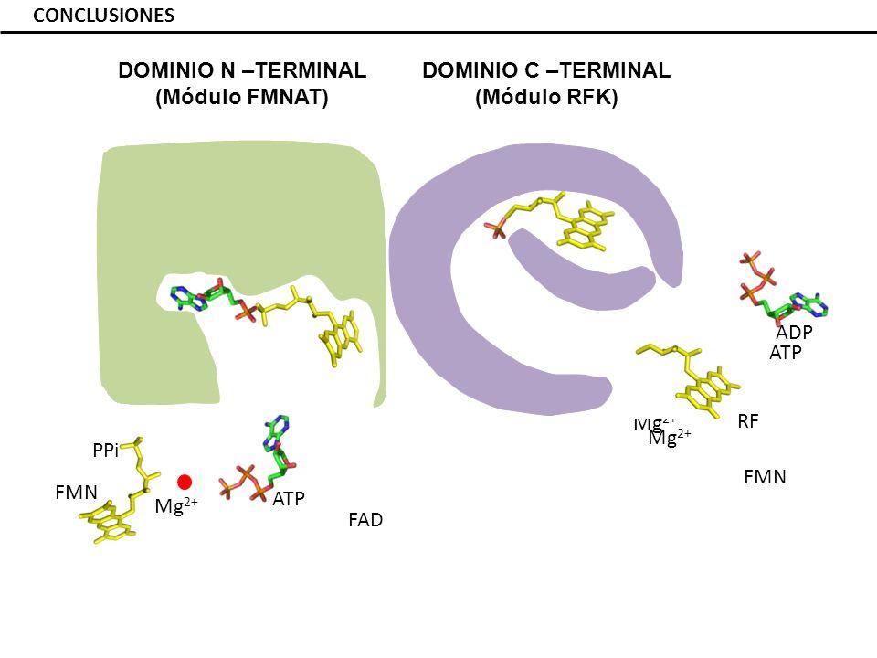 DOMINIO N –TERMINAL (Módulo FMNAT) DOMINIO C –TERMINAL (Módulo RFK)