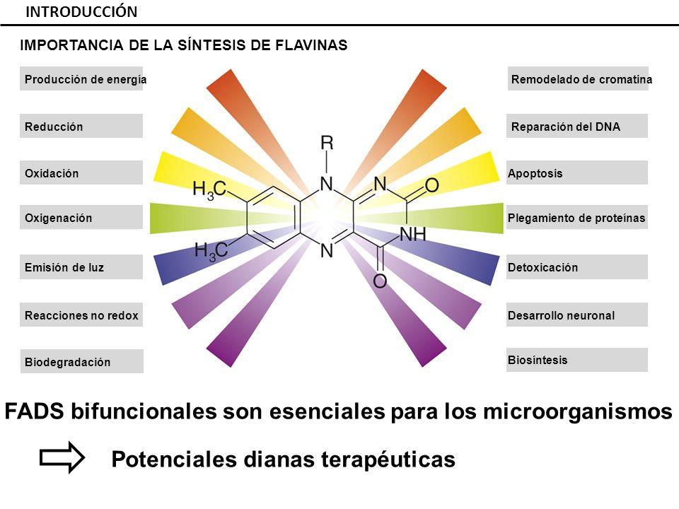 FADS bifuncionales son esenciales para los microorganismos