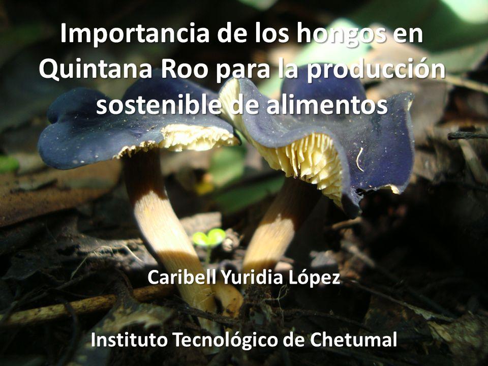 Caribell Yuridia López Instituto Tecnológico de Chetumal