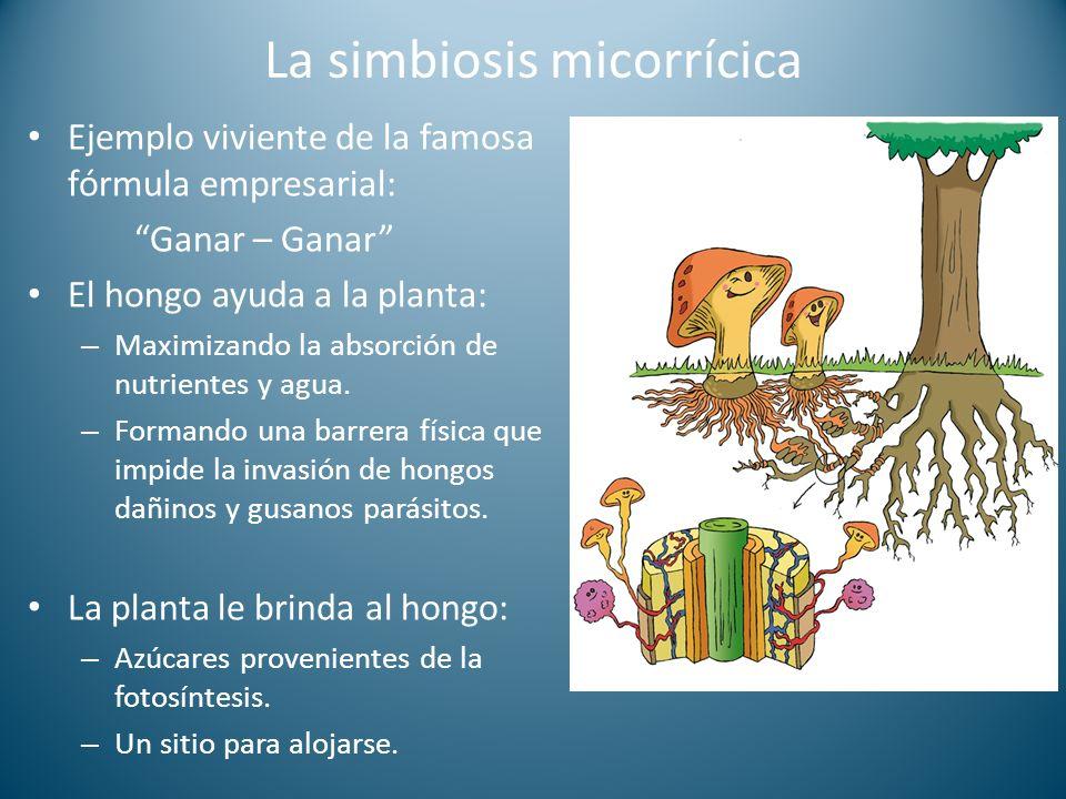 La simbiosis micorrícica