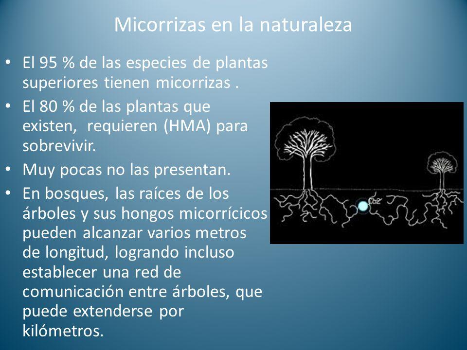 Micorrizas en la naturaleza