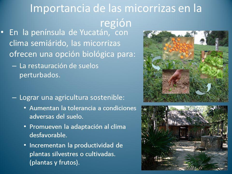 Importancia de las micorrizas en la región