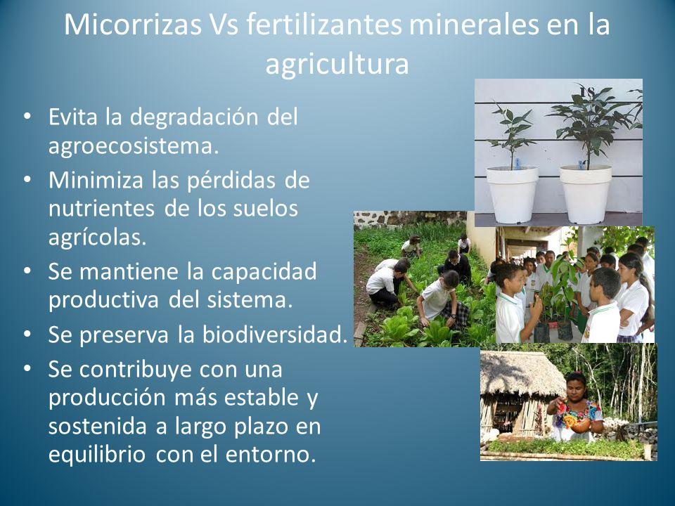Micorrizas Vs fertilizantes minerales en la agricultura