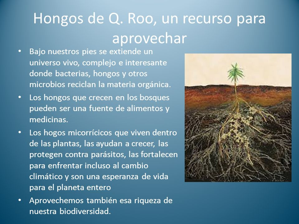Hongos de Q. Roo, un recurso para aprovechar
