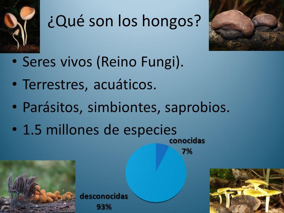 ¿Qué son los hongos Seres vivos (Reino Fungi). Terrestres, acuáticos.