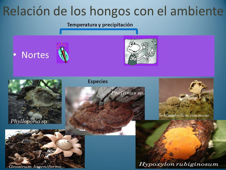 Relación de los hongos con el ambiente