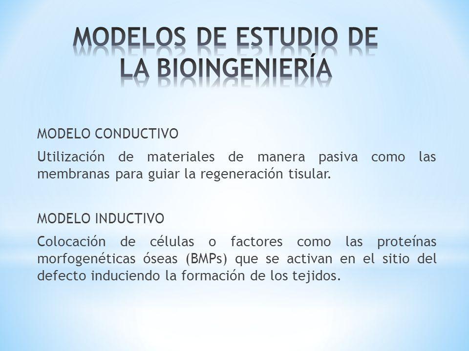 MODELOS DE ESTUDIO DE LA BIOINGENIERÍA