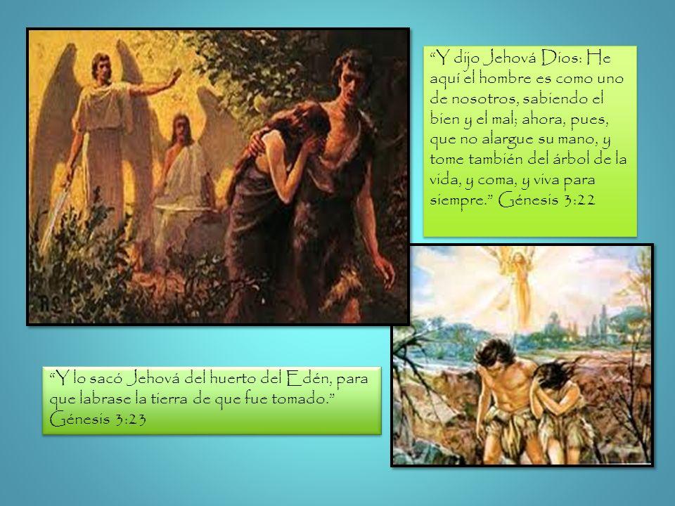Y dijo Jehová Dios: He aquí el hombre es como uno de nosotros, sabiendo el bien y el mal; ahora, pues, que no alargue su mano, y tome también del árbol de la vida, y coma, y viva para siempre. Génesis 3:22