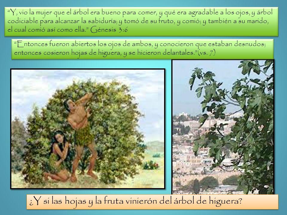 ¿Y si las hojas y la fruta vinierón del árbol de higuera