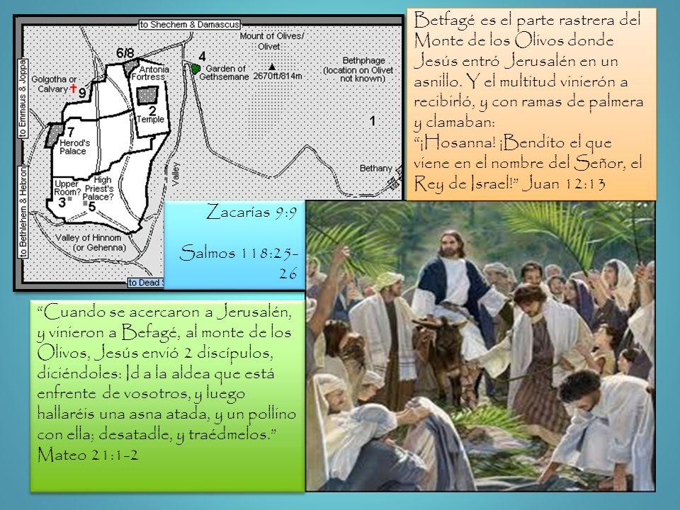 Betfagé es el parte rastrera del Monte de los Olivos donde Jesús entró Jerusalén en un asnillo. Y el multitud vinierón a recibirló, y con ramas de palmera y clamaban: