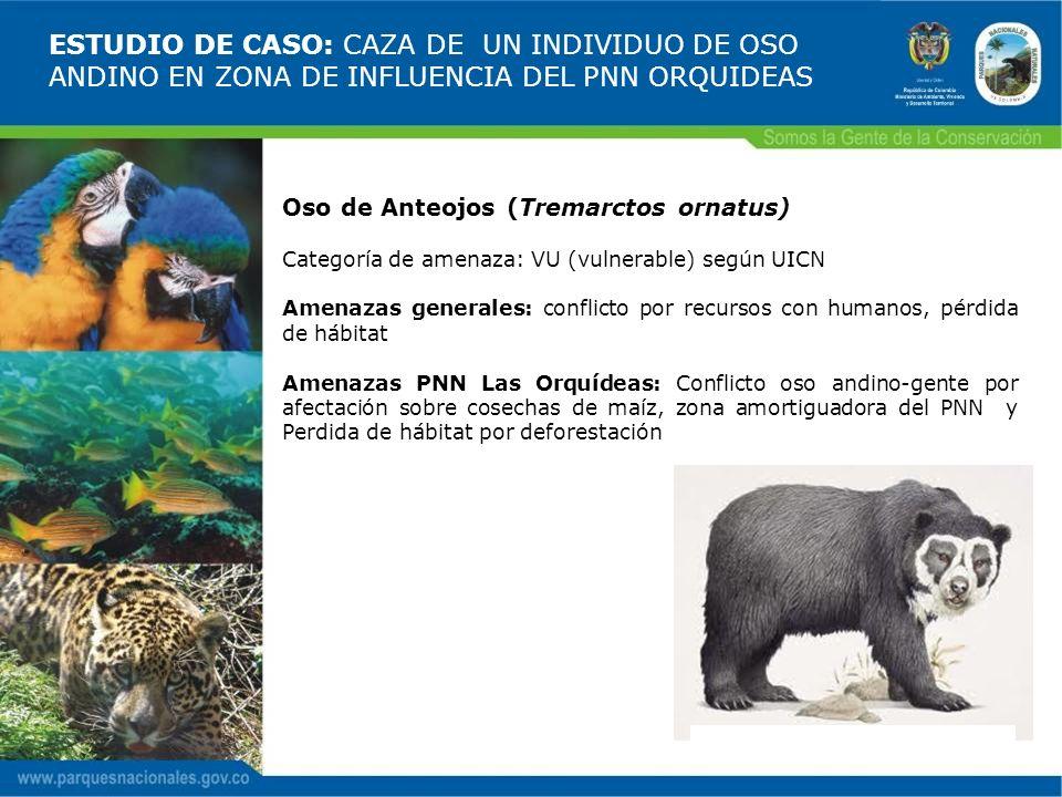 ESTUDIO DE CASO: CAZA DE UN INDIVIDUO DE OSO ANDINO EN ZONA DE INFLUENCIA DEL PNN ORQUIDEAS