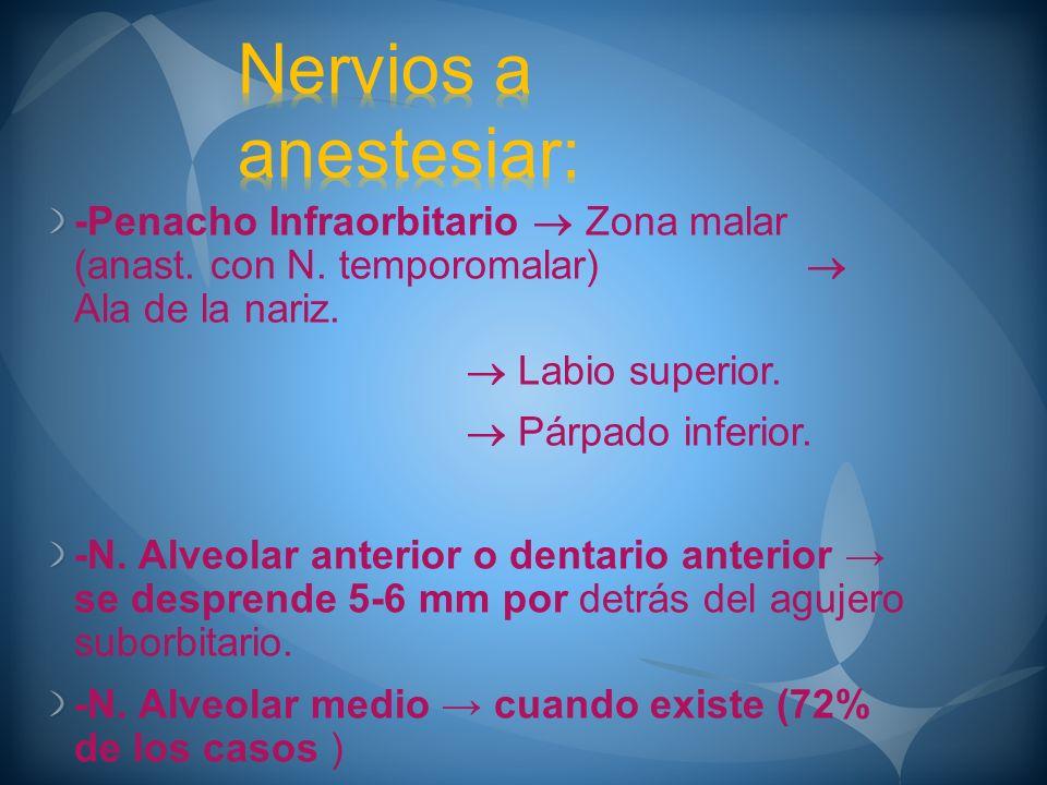 Nervios a anestesiar: -Penacho Infraorbitario  Zona malar (anast. con N. temporomalar)  Ala de la nariz.