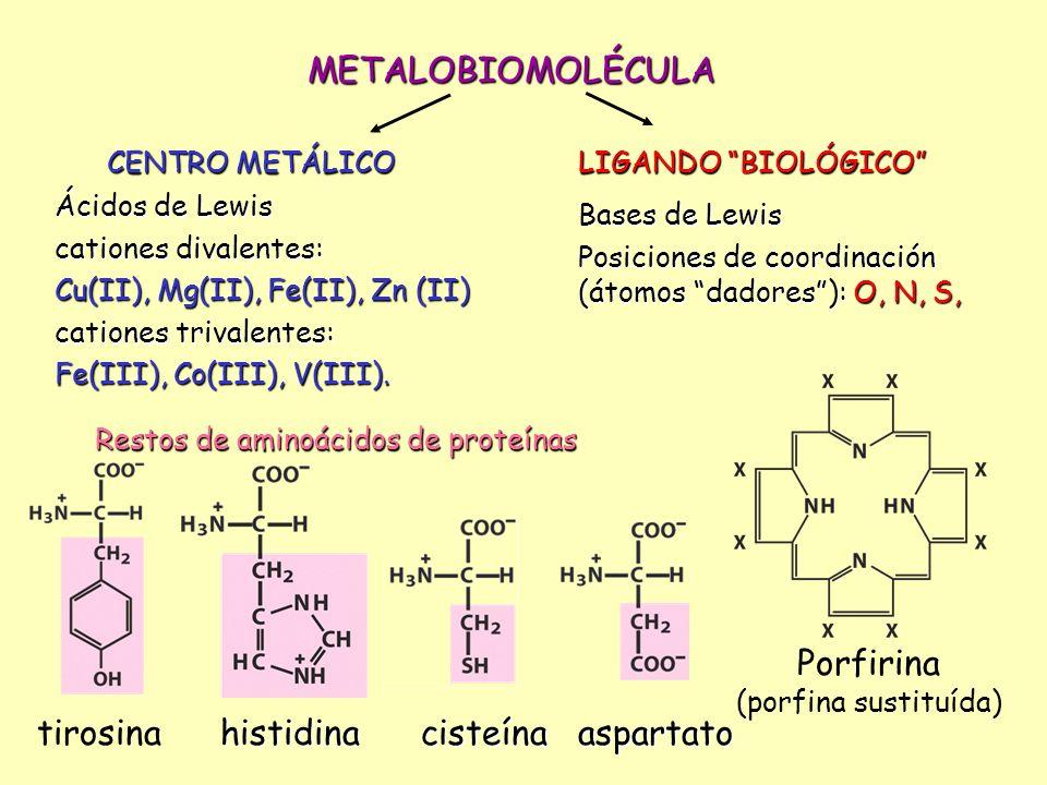 Restos de aminoácidos de proteínas