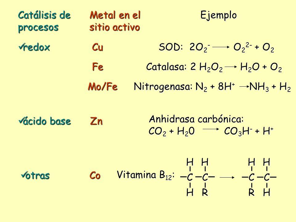 Catálisis de procesos Metal en el sitio activo. Ejemplo. redox. Cu. SOD: 2O2- O22- + O2.