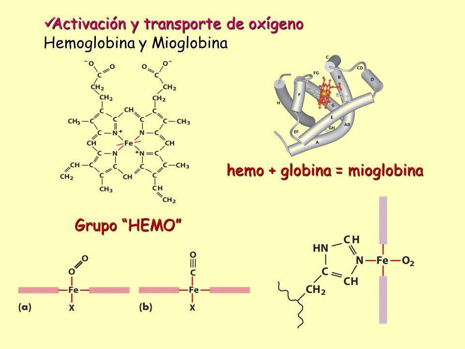 Activación y transporte de oxígeno