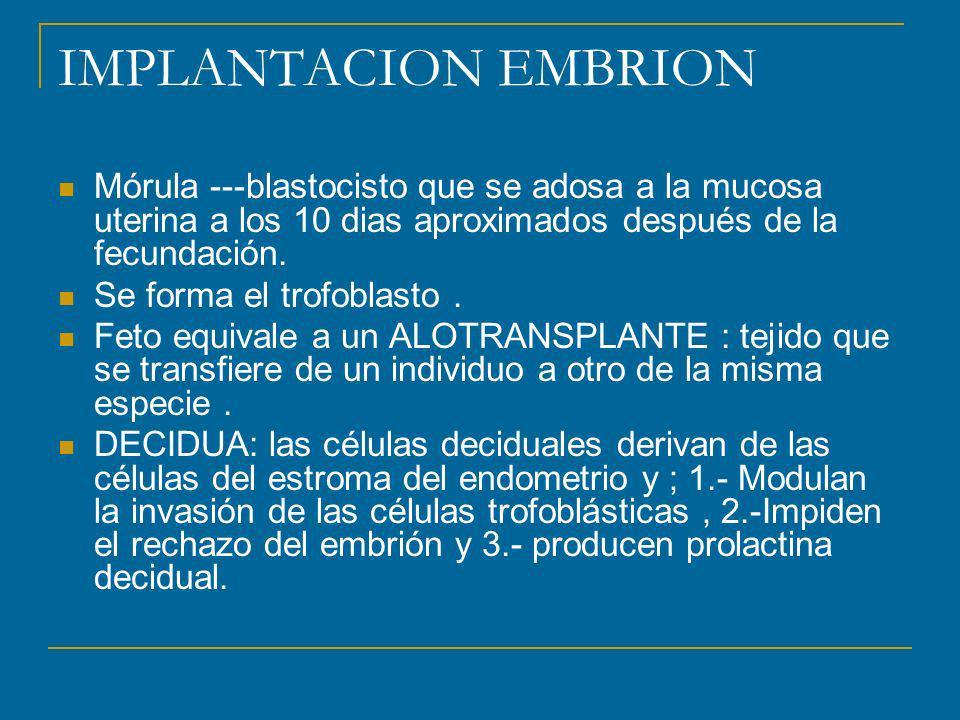 IMPLANTACION EMBRION Mórula ---blastocisto que se adosa a la mucosa uterina a los 10 dias aproximados después de la fecundación.