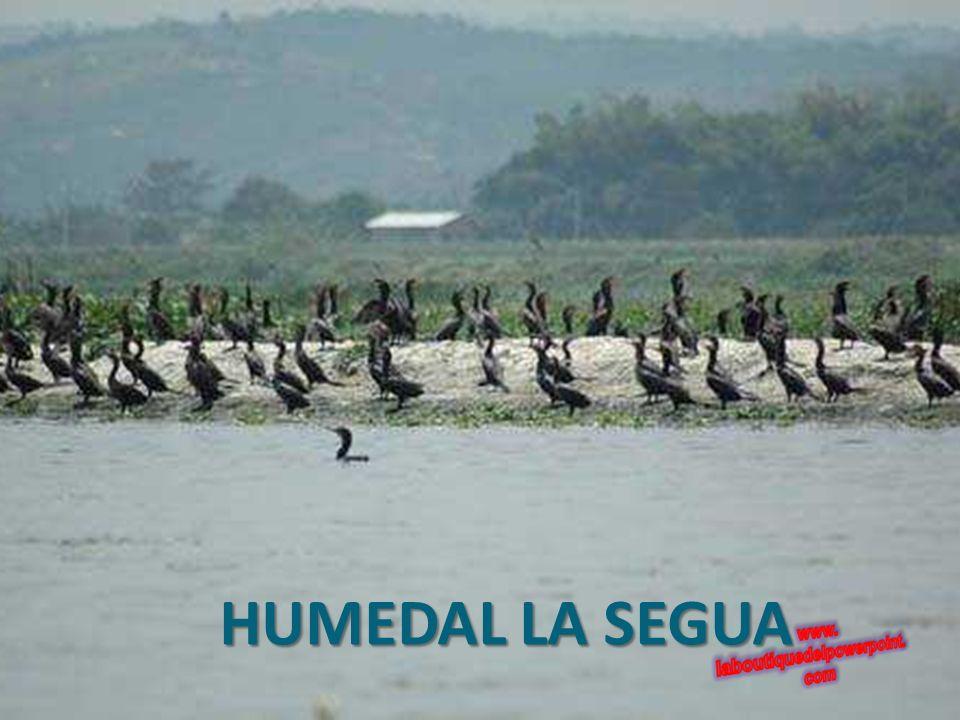 HUMEDAL LA SEGUA