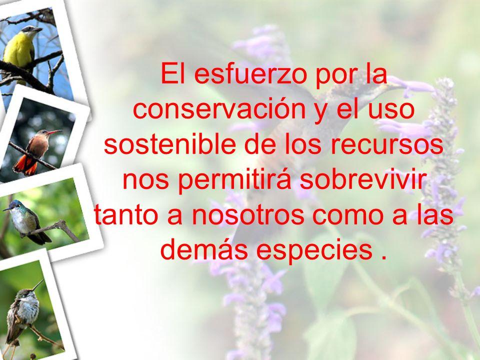 El esfuerzo por la conservación y el uso sostenible de los recursos nos permitirá sobrevivir tanto a nosotros como a las demás especies .