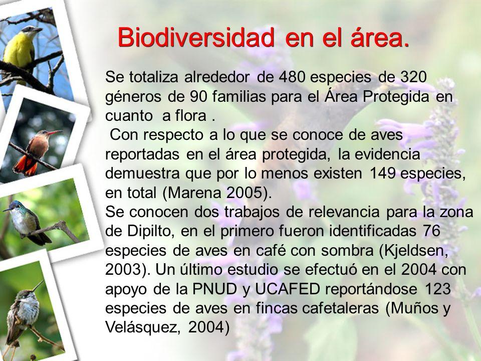 Biodiversidad en el área.