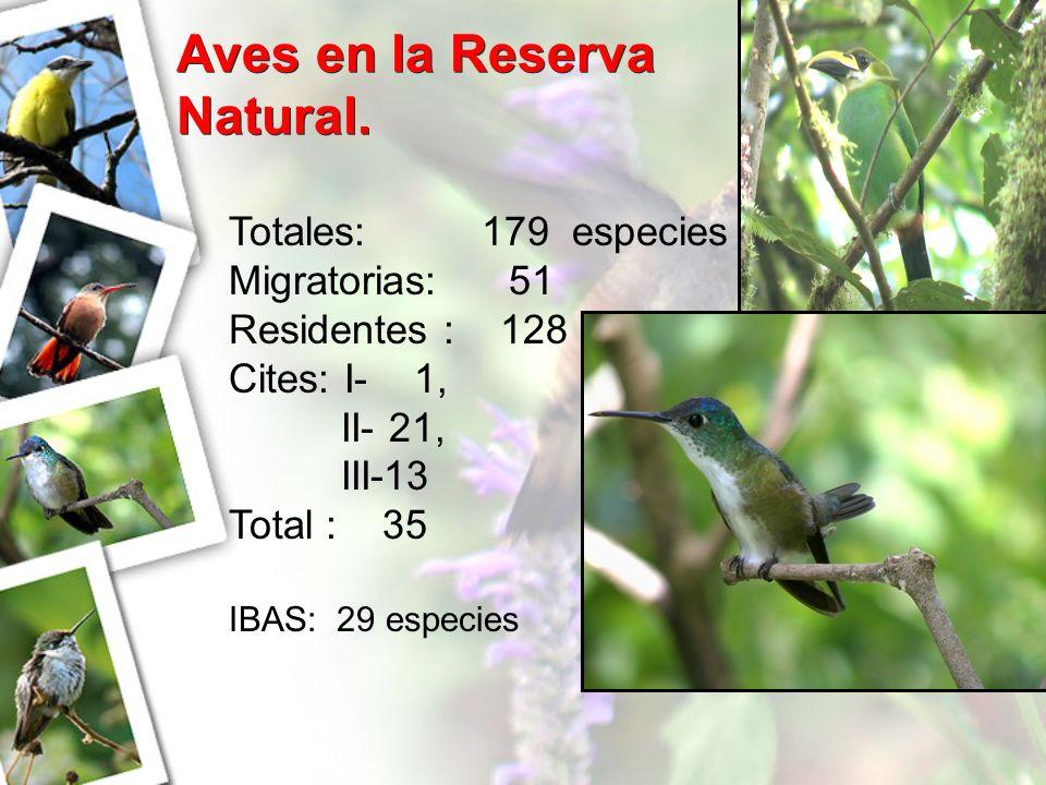 Aves en la Reserva Natural.