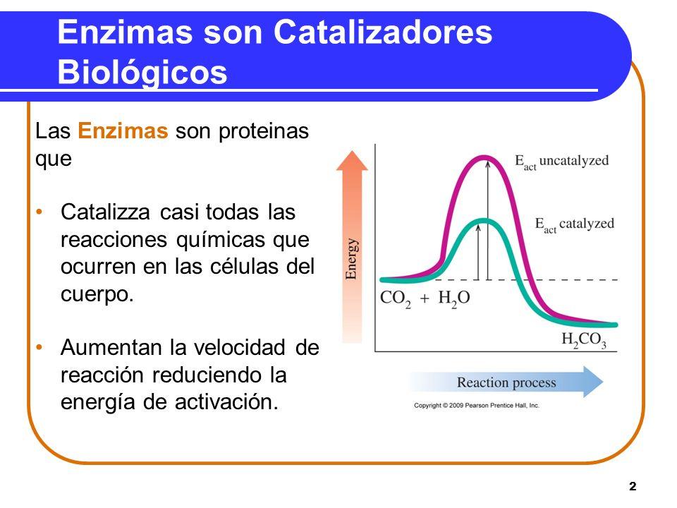 Enzimas son Catalizadores Biológicos