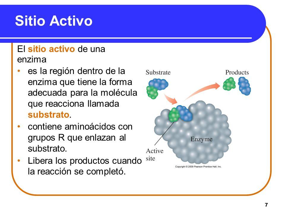 Sitio Activo El sitio activo de una enzima