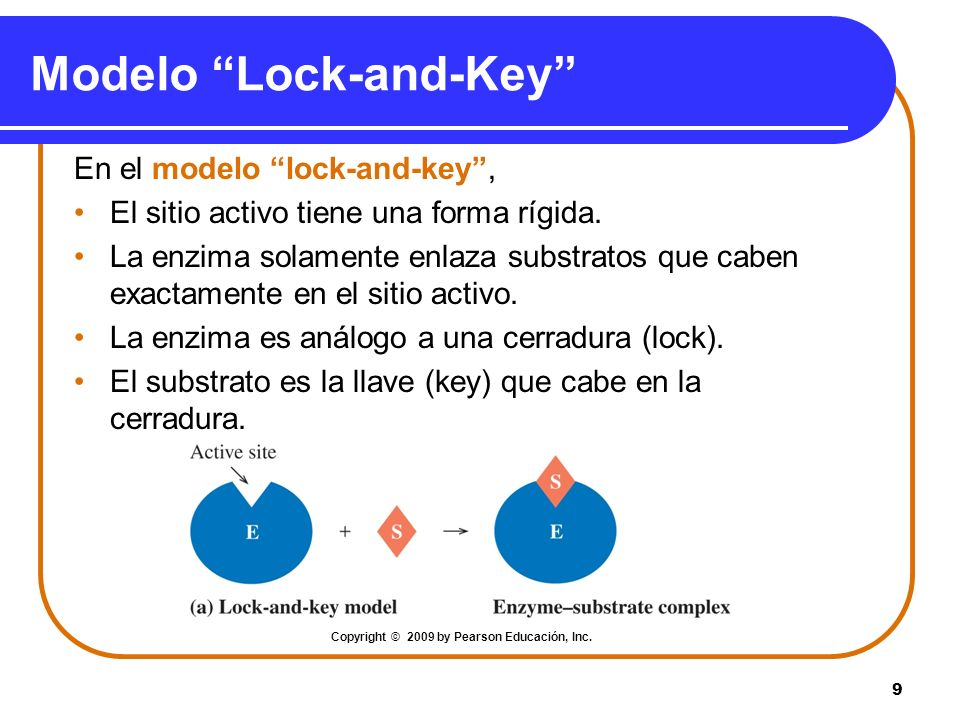 Modelo Lock-and-Key