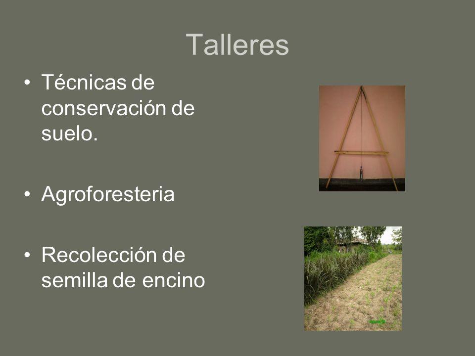 Talleres Técnicas de conservación de suelo. Agroforesteria