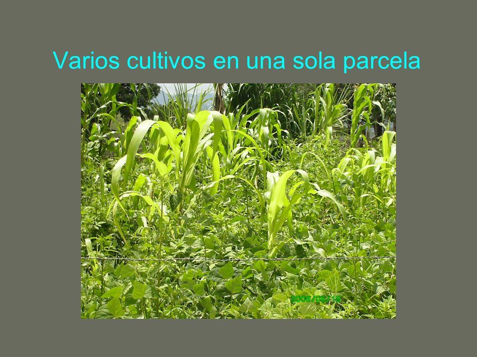 Varios cultivos en una sola parcela