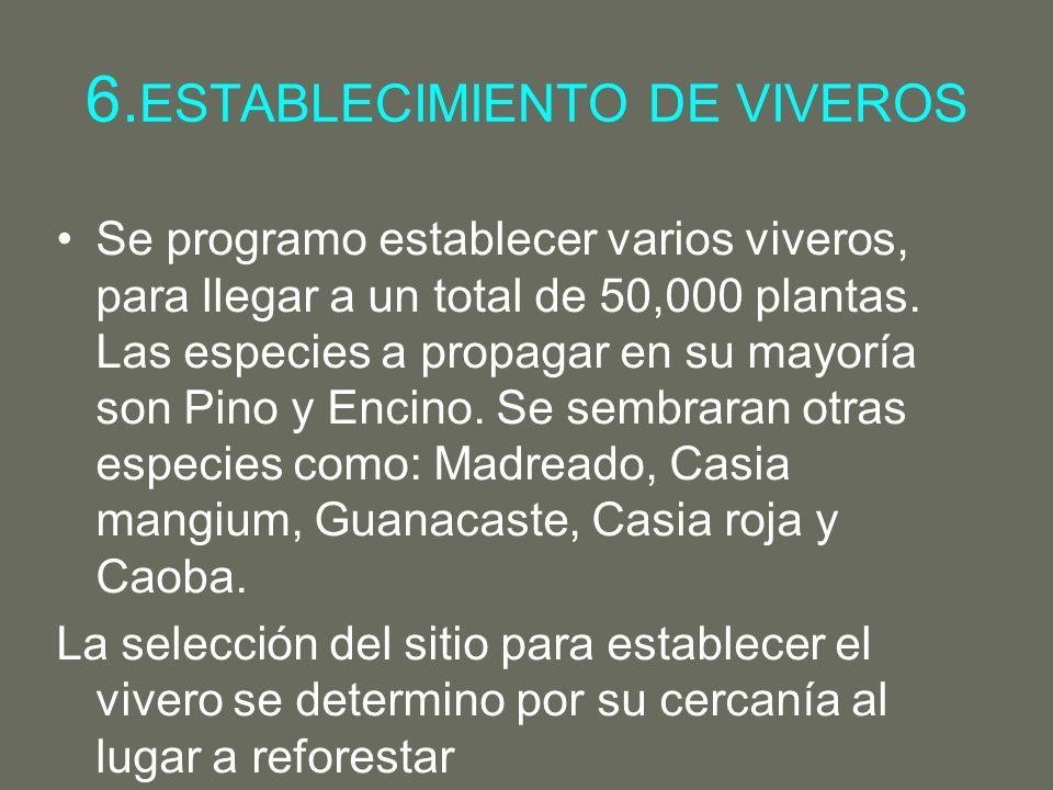 6.ESTABLECIMIENTO DE VIVEROS