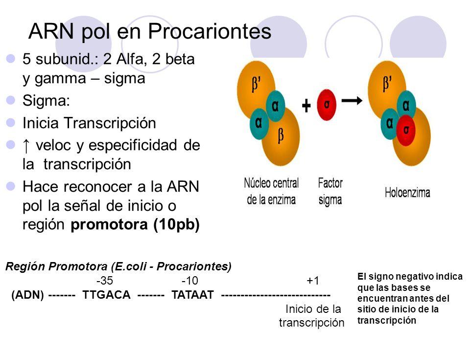 ARN pol en Procariontes