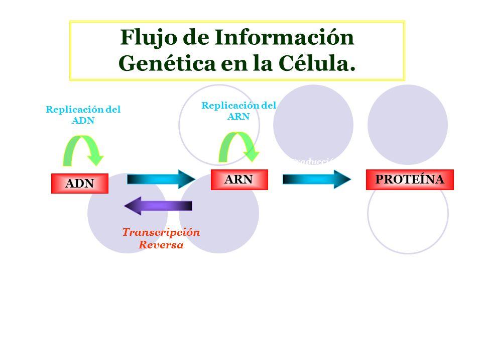 Flujo de Información Genética en la Célula. Transcripción Reversa