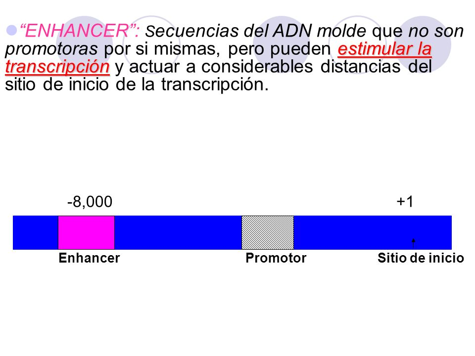 ENHANCER : Secuencias del ADN molde que no son promotoras por si mismas, pero pueden estimular la transcripción y actuar a considerables distancias del sitio de inicio de la transcripción.