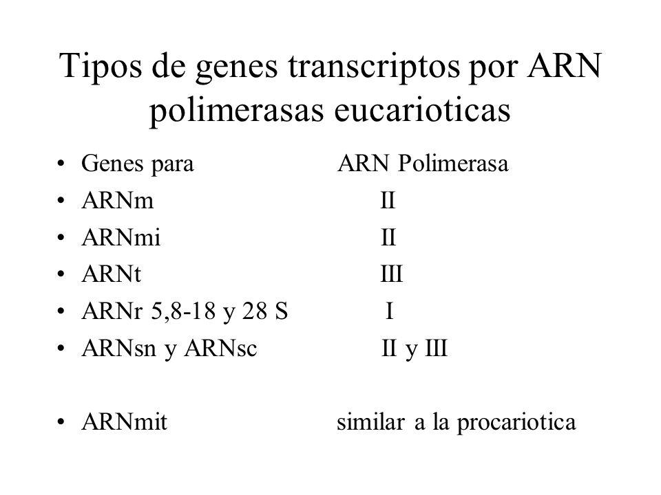 Tipos de genes transcriptos por ARN polimerasas eucarioticas